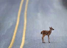 8  малознайомих фактів  про дорожній рух