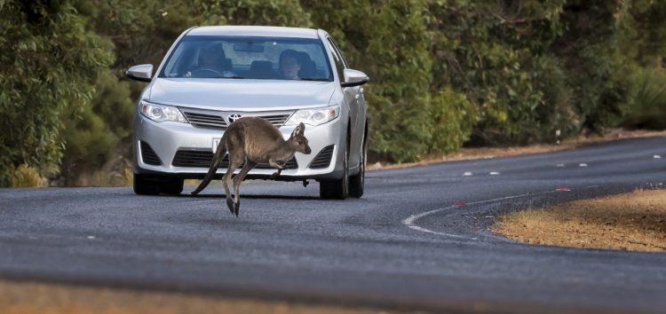 Неочікувана проблема автономних машин