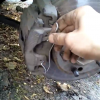 Заміна пружини гальмівного супорту QUICK BRAKE 109-1057 на Ford Scorpio (відео)