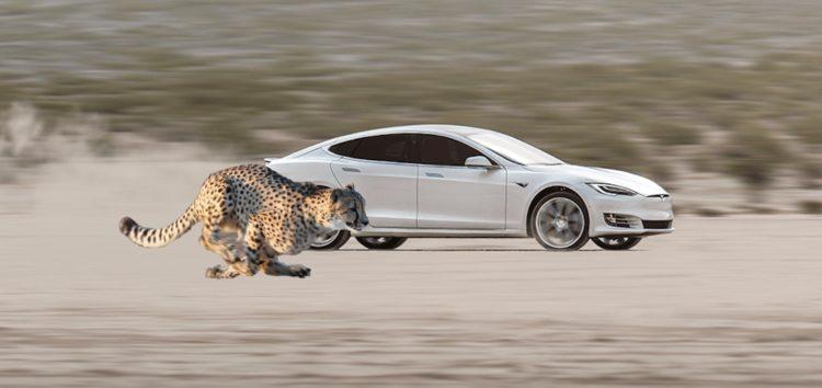 Tesla Model S і X отримає «старт гепарда»