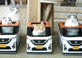 Nissan дарує котикам міні-автомобілі