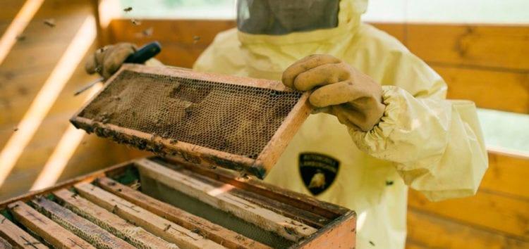 На підприємстві Lamborghini займаються бджільництвом