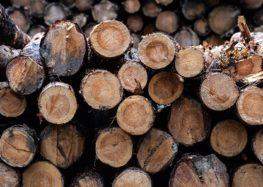 Фіни будуть виготовляти батареї для електрокарів з деревини