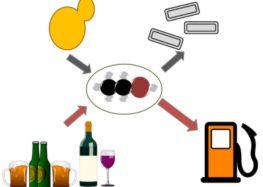 Вино використають в пальному гоночних болідів